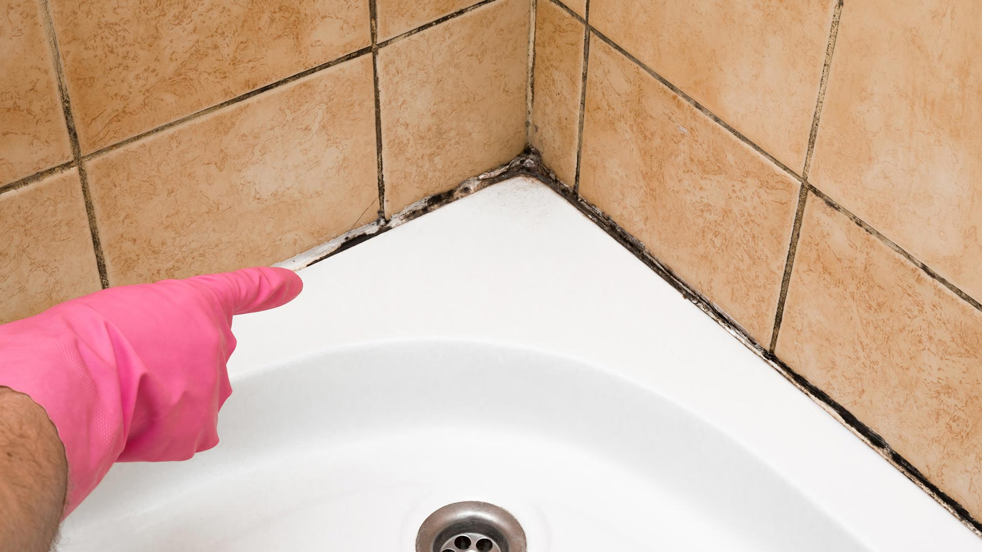 Mold vs. Mildew: How to Tell the Difference
