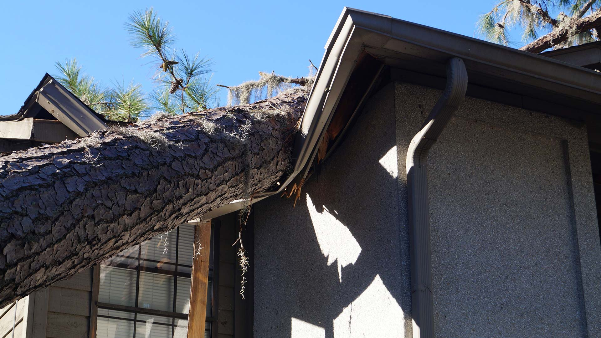What to Do if a Tree Falls on Your Central Florida Roof