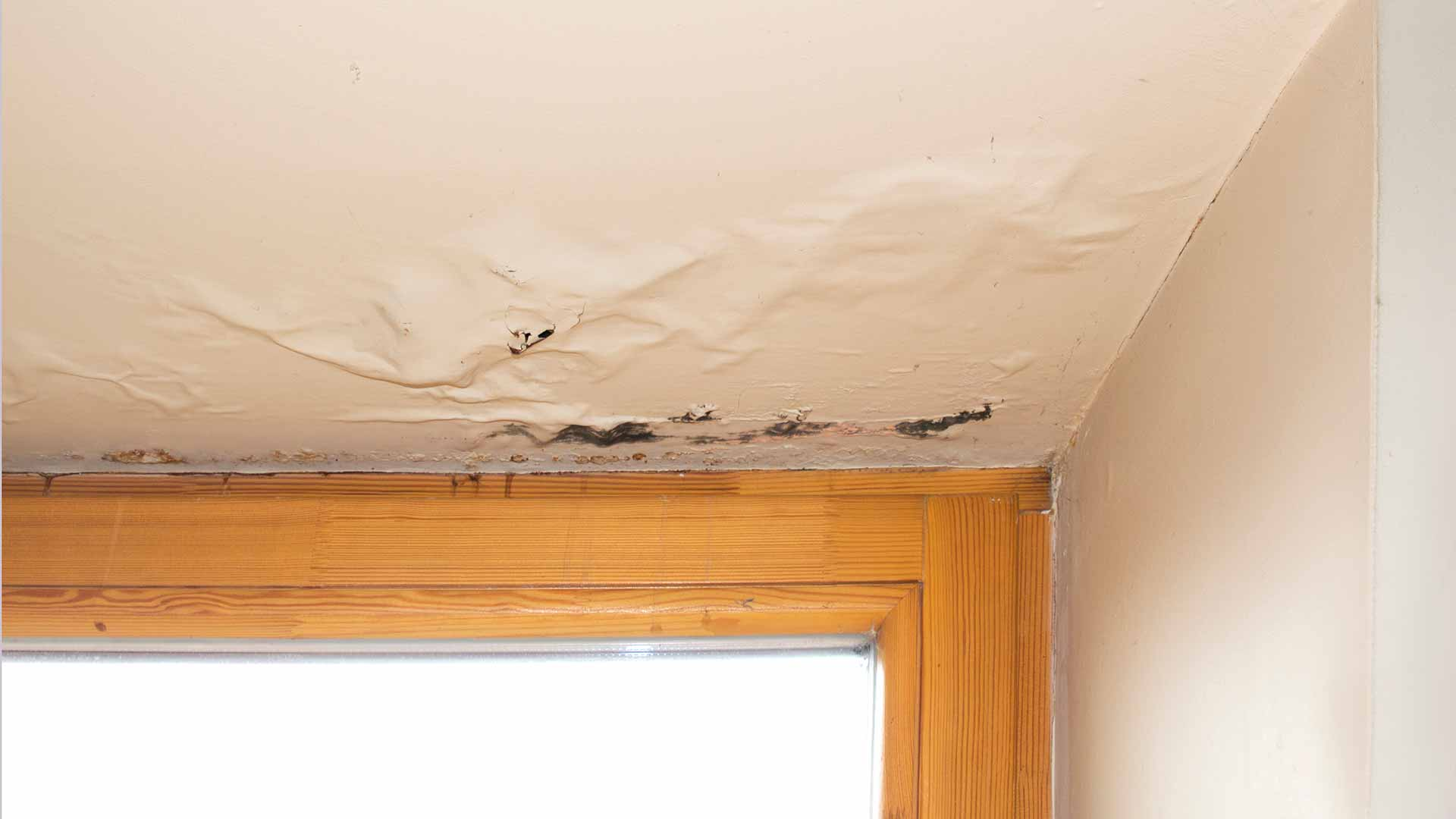 Damage Caused by Waiting Too Long to Repair a Roof Leak