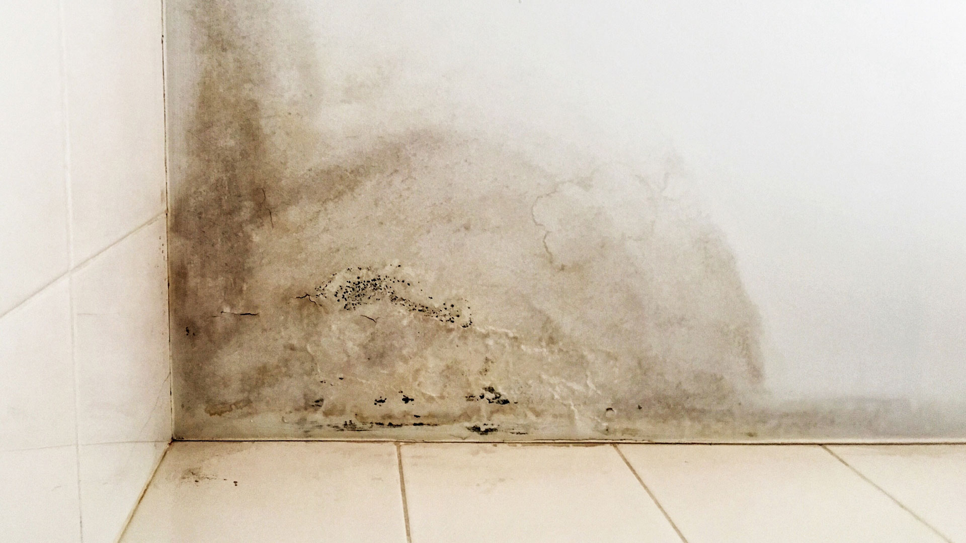 Signs the Property You're Interested in Has Water Damage