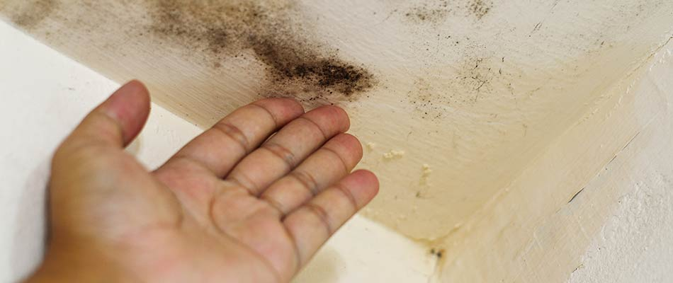 Restoration worker pointing out mold growing on ceiling in Lakeland, FL.