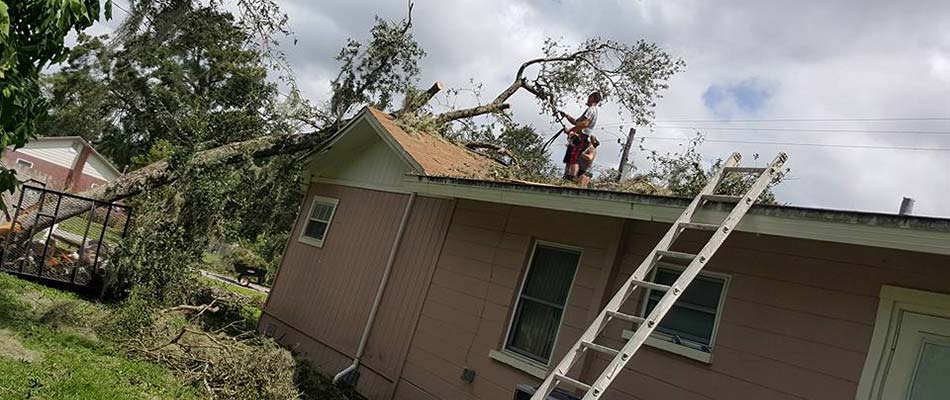 A tree fell through this roof in Winter Haven, FL.